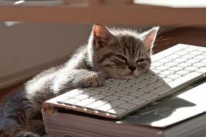 writing-cat